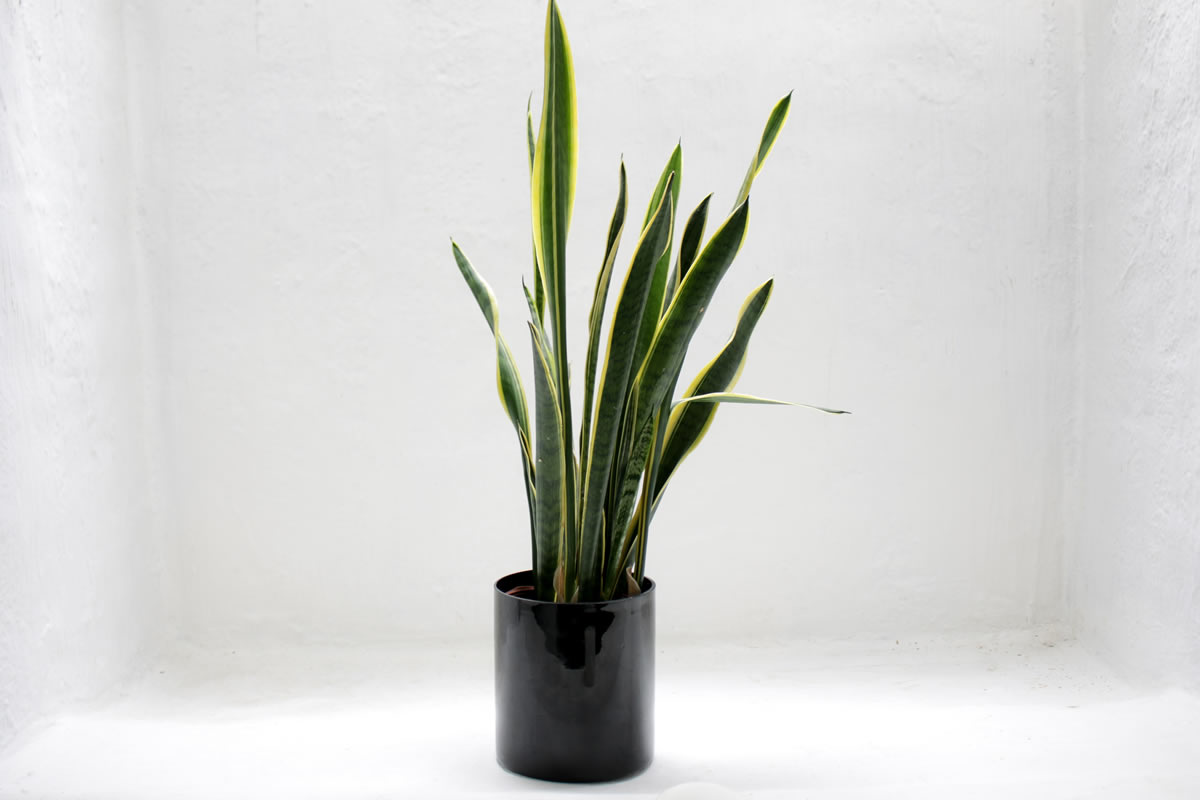 3 Resilient Houseplants to Keep