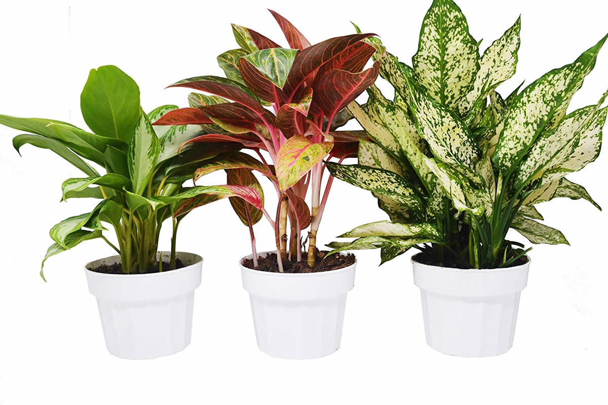 4 Plants That Love Apartment Life