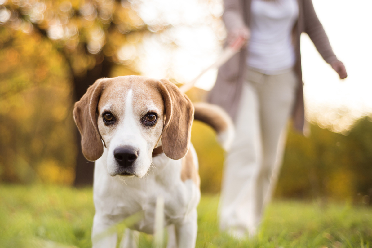 Three Reasons Why All Apartments Should Be Dog Friendly