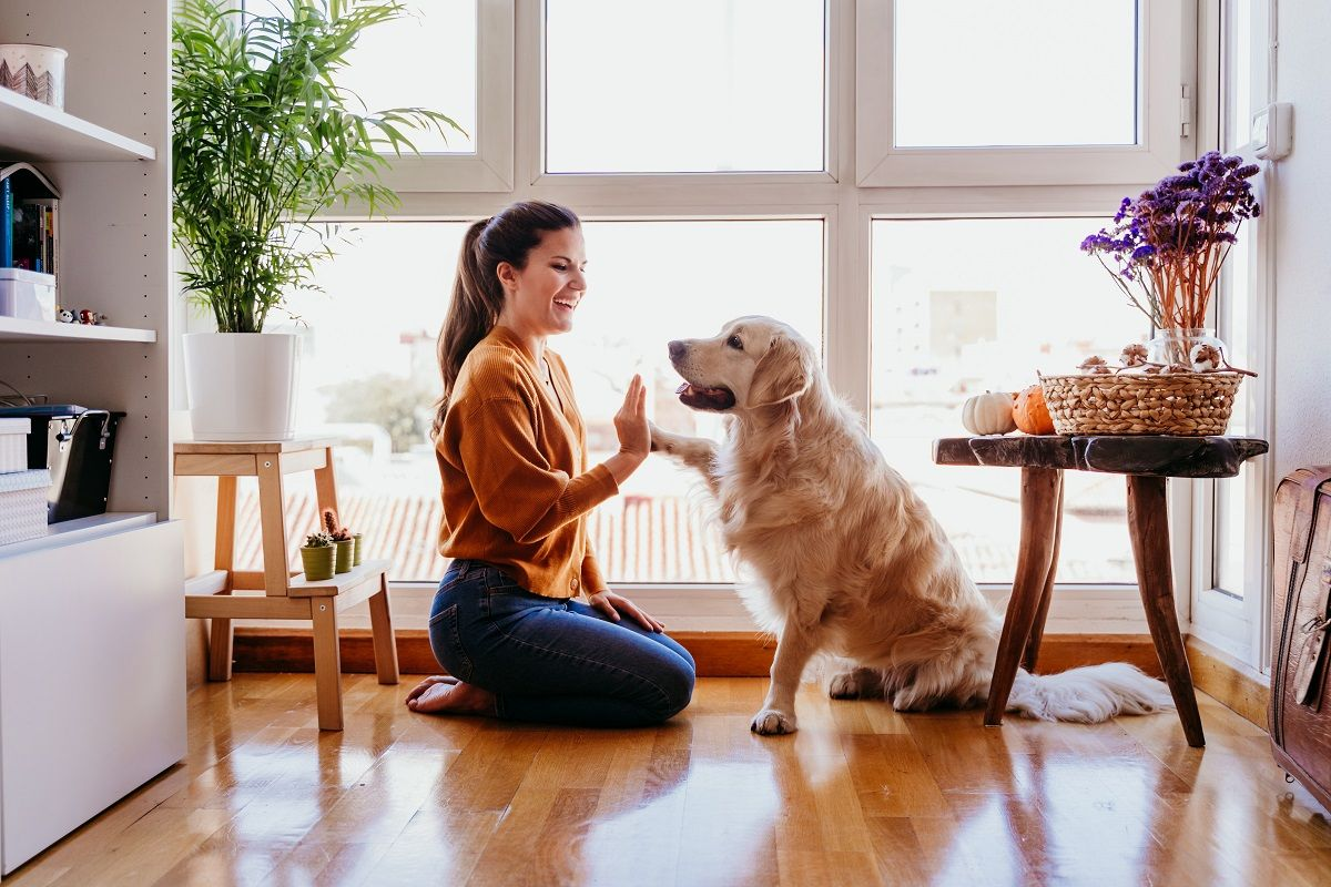 Five Tips to Keep Your Apartment Clean When You Have a Dog