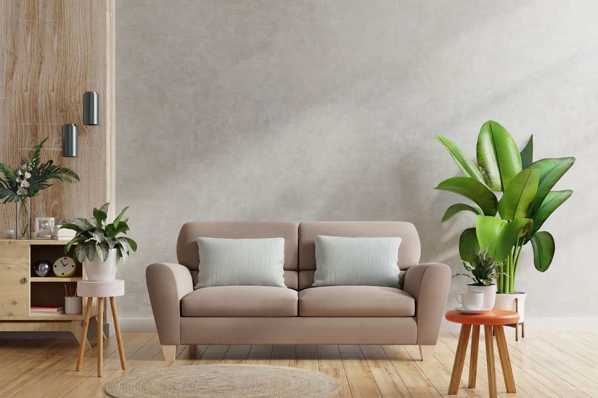 Five Indoor Plants that Are Great for Apartments